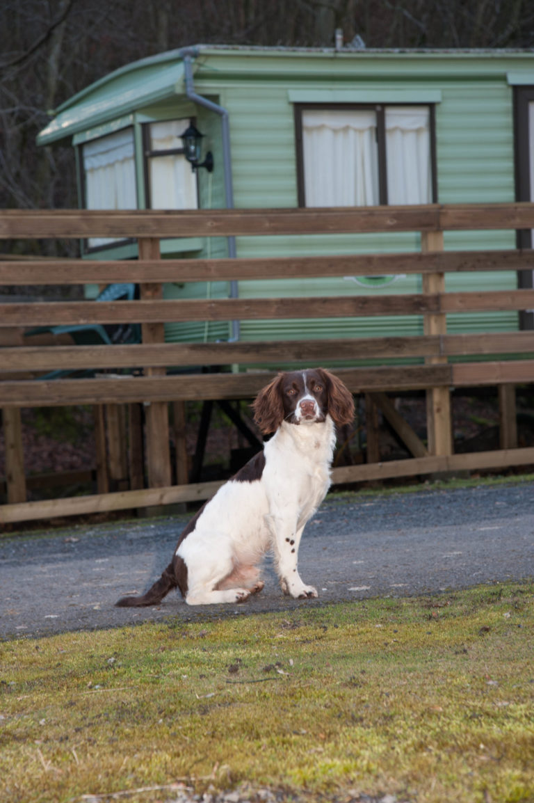 National Pet month poll - dog on holiday park